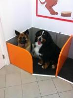happydog5.jpg